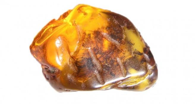 99 milyon yıllık yılan yavrusu fosili bulundu