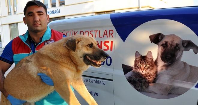 Sokak hayvanlarına özel ambulans