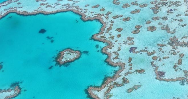Büyük Set Resifini robotlar koruyacak