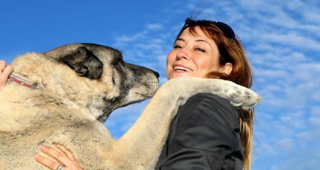 Kangal köpeklerine hayran kaldılar