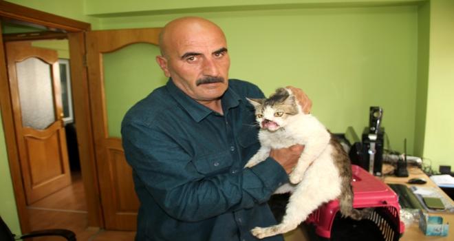 Kanserli kedi tedavi için İstanbula gönderildi