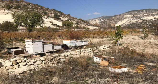 Ayıların arı kovanlarına zarar verdiği iddiası