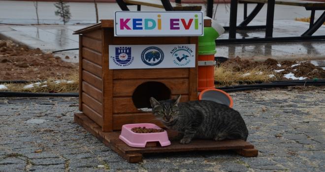 Üniversite öğrencilerinden kedi ve köpekler için ev