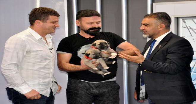 Hakan Keleşe canlı yayında Kangal köpeği sürprizi