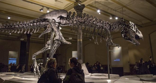 Kanadada dünyanın en büyük ve en yaşlı Trex fosili bulundu