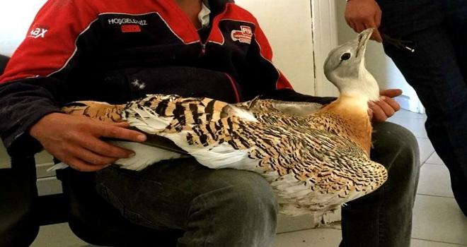 Eskişehirde yaralı Toy kuşu bulundu