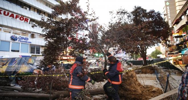 Başkentte devrilen ağaç 3 kişinin yaralanmasına yol açtı