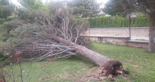 Fırtına Avanosta hayatı olumsuz etkiledi