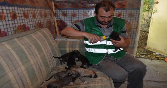 Anneleri ölen 8 köpek yavrusuna belediye işçisi sahip çıktı