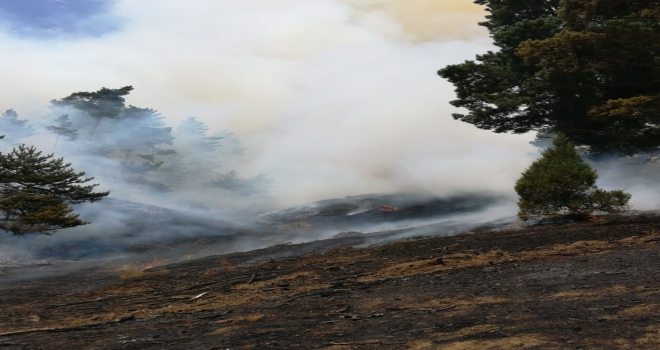 GÜNCELLEME  Yozgatta orman yangını