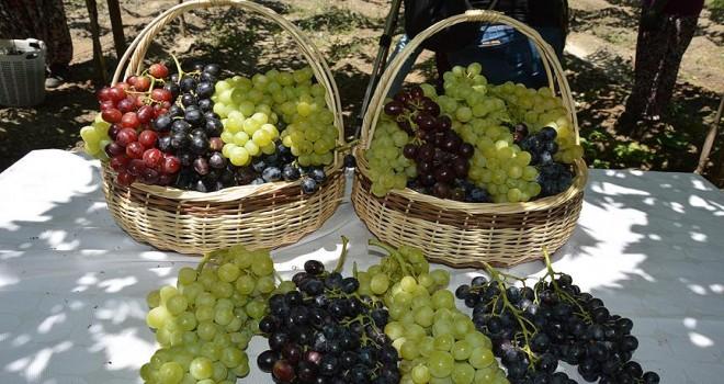 Yaş üzüm ihracatı  yüzde 86,7 arttı