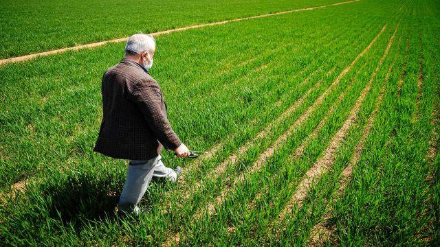 Buğdayda bu yıl rekolte beklentisi 19 milyon ton