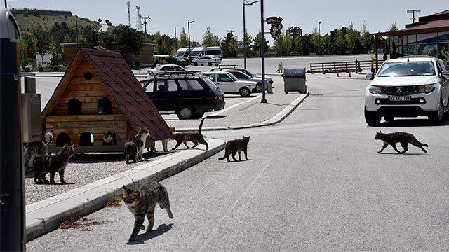 Selçuklu da sokak hayvanları unutulmadı