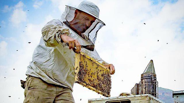 Türkiye'de arı kayıpları arttı