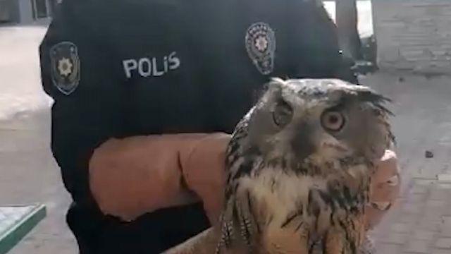 Yaralı puhu kuşu ve şahin tedaviye alındı