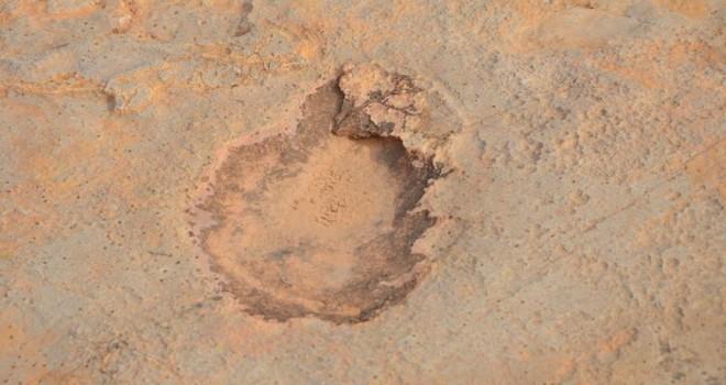 140 milyon yıllık keşif