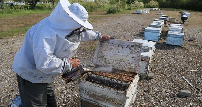 Bal arılarının yayla yolculuğu başladı