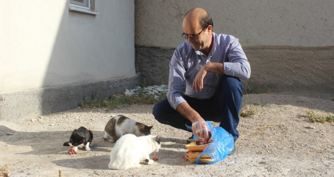 Yolunu gözleyen kedileri ciğerle besliyor