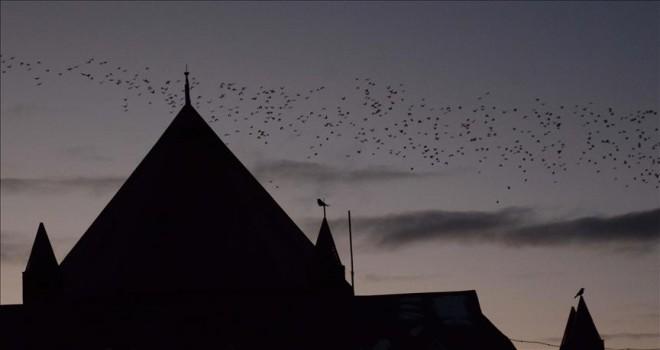 'Dansçı kuşların' Palandöken'deki doyumsuz güzelliği