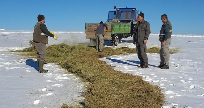 Yaban hayvanları için kar üzerine yem bırakıldı