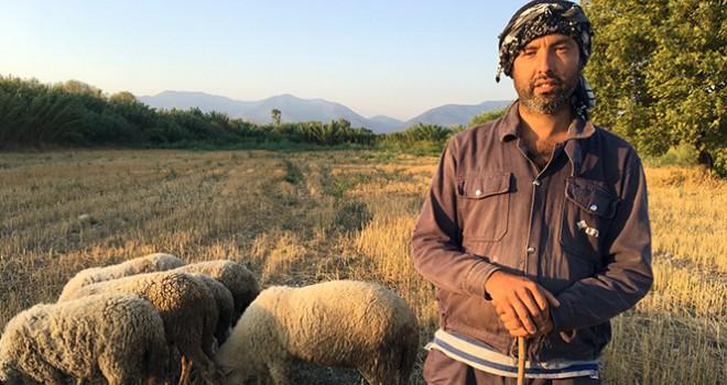 Siyaseti bırakıp çobanlık yapıyor