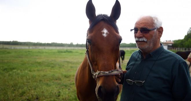 Şampiyon atların yarım asırlık seyisi: Hacı İpek