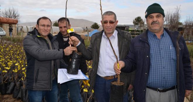 Ilgın'da çiftçilere 5 bin fidan dağıtıldı