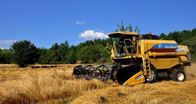Buğdayın atası 'siyez'in hasadı başladı