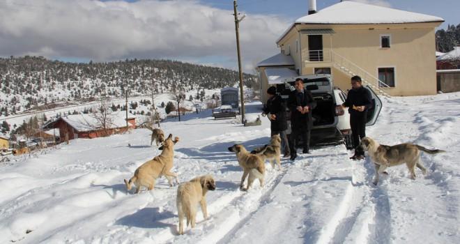 Gönüllü ekip, sokakköpeklerini unutmadı