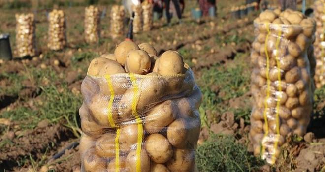 Konya'da patates üretimi 3'e katlandı