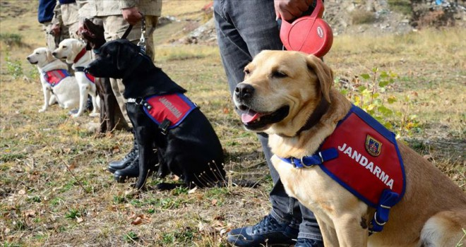 Dedektör köpekleri terörle mücadelede önemli görev üstleniyor