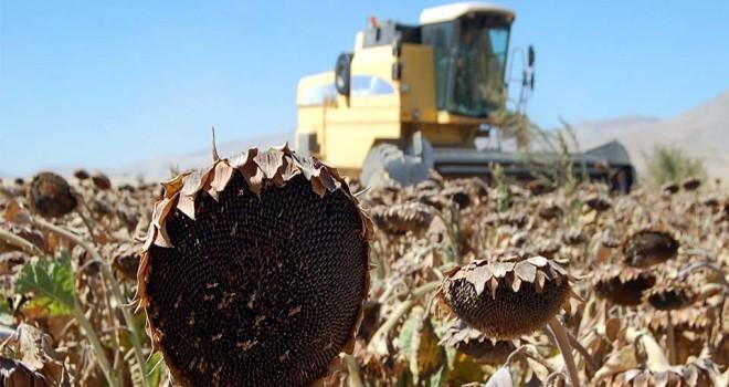 Konya, ayçiçeği  üretiminde ikinci