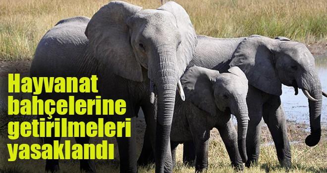Hayvanat bahçelerine getirilmeleri yasaklandı