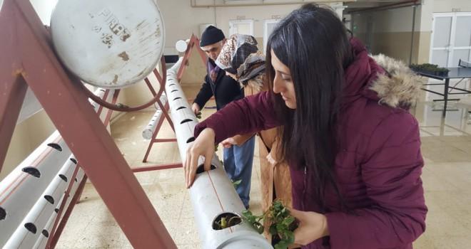 Topraksız çilek üretim denemesi başladı