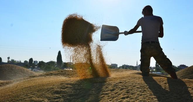 Hububat fiyatları çiftçiyi sevindirdi