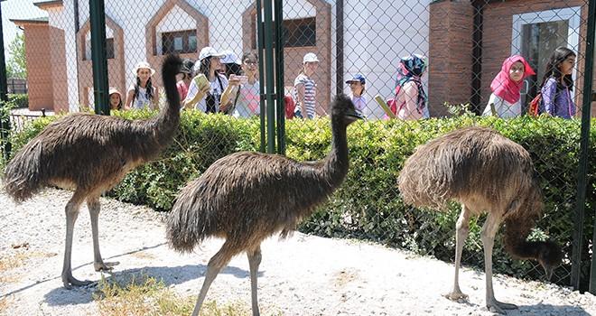Karatay Hayvanat Bahçesi'nin  yeni misafirleri 'Emu Kuşları'