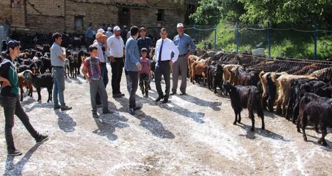 Vatandaşlara 300 Kilis keçisi dağıtıldı