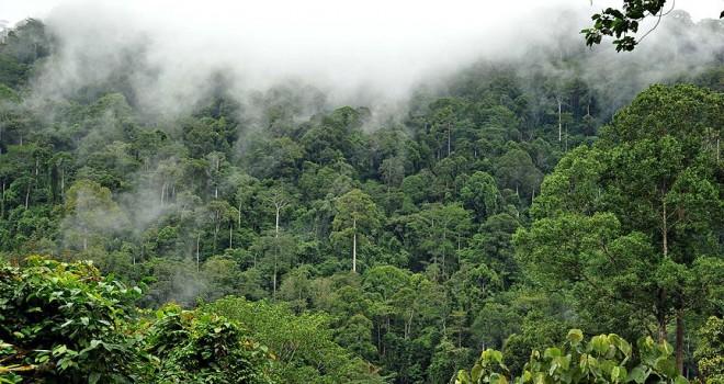 Amazonlarda insan yerleşimine dair yeni bilgiler ortaya çıktı
