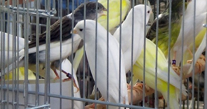 Kuşların kupa heyecanı