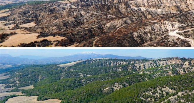 Yanan orman alanlarının yarısından fazlası ağaçlandırıldı