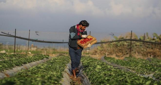 İsrail uçaklarından Gazze sınırındaki arazilere kimyasal ilaç