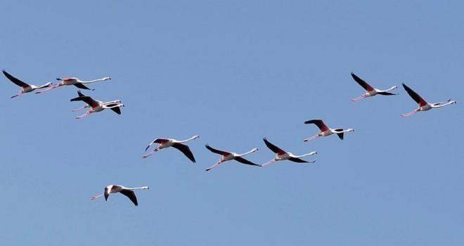 Eber Gölü doğa tutkunlarını ağırlıyor